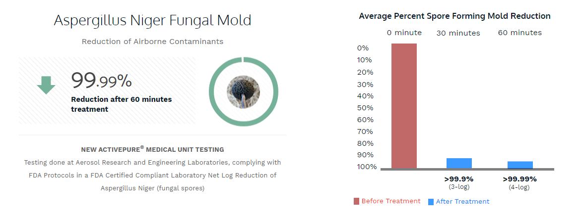 Aspergillus Niger Fungal Mold